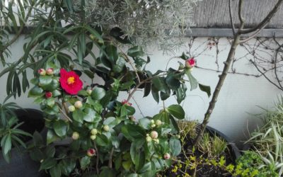 Garten, Putzen, Internet – 20.3., der Quarantäne 5. Tag